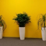 Indoor Plant Line-up - Modern & Stylish
