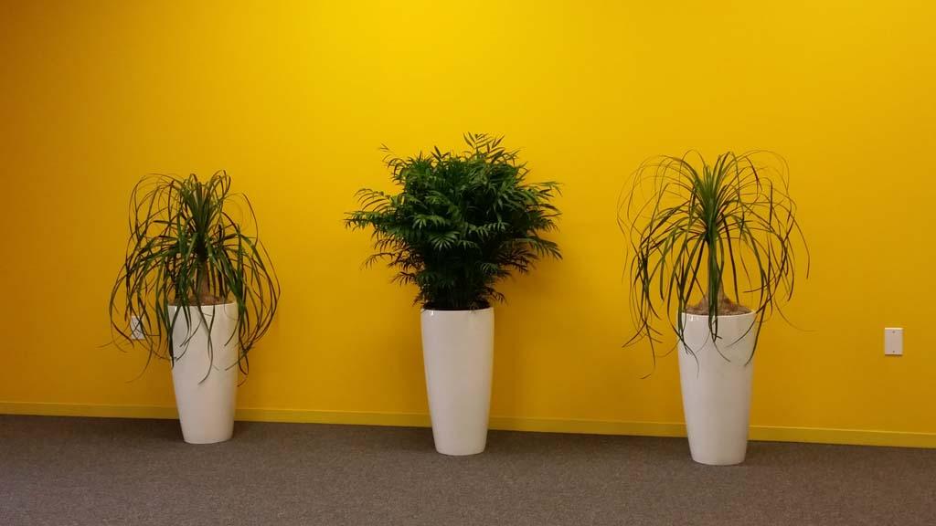 Indoor Plant Line-up - Modern & Stylish
