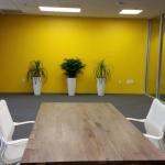 Interior Plants - Improve Office Space