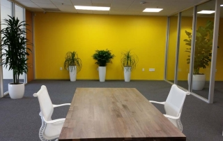 Interior Plants - Improve Office Space