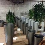 Interior Plants - Installation Process