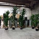 Interior Plants - Installation Process underground