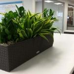 Lechuza Planter Box - Indoor Plants