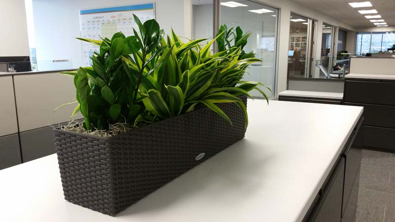 Lechuza Planter Box - Indoor Plants