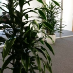 Indoor Plants Bring Oxygen & Softness to Office