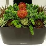 Succulent Arrangement - Lechuza Window Sill Planter