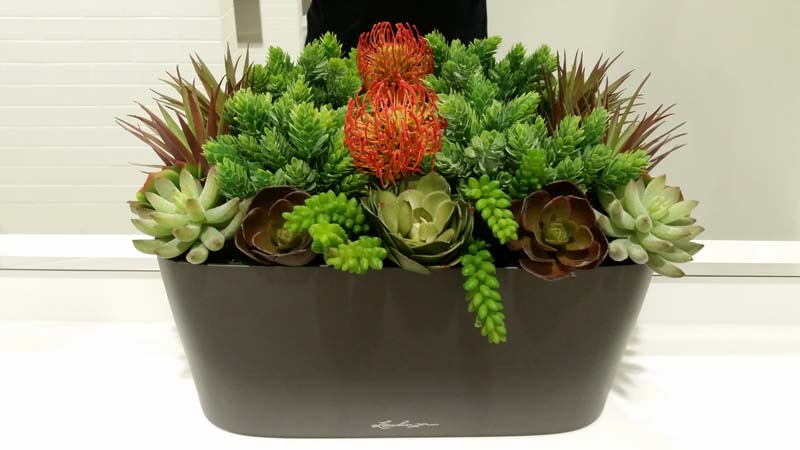 Succulent Arrangement - Lechuza Window Sill Planter
