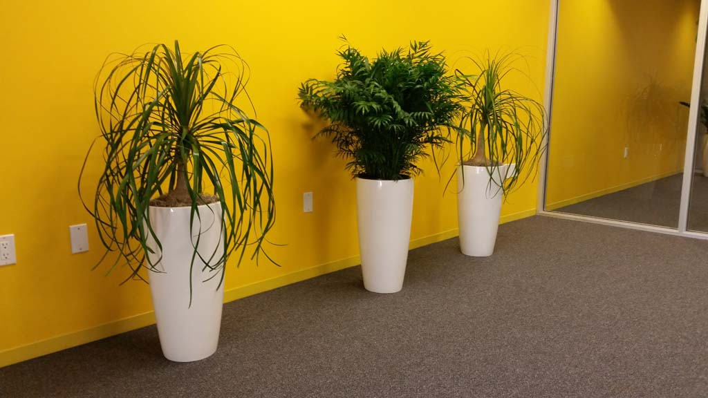 Tall Planters Trio   Modern Interior Plants