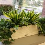 Window Box - Interior Plants Design