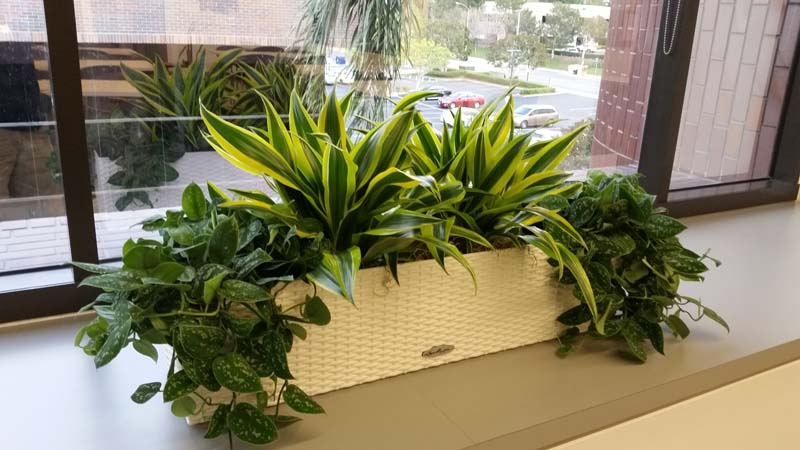 Interior Plants For Credit Union