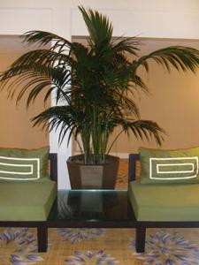 Kentia Palm - Indoor Plant Maintenance