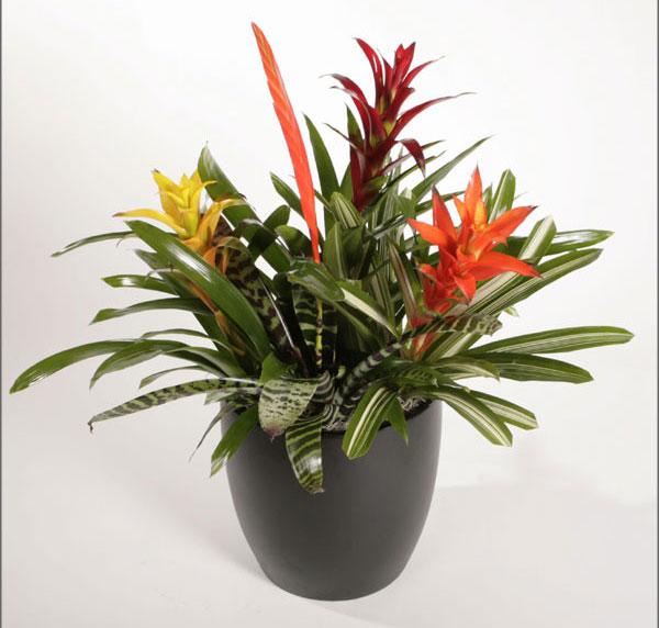 bromeliads-1