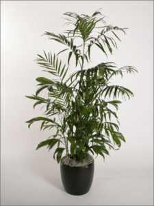 helping-plants-acclimate