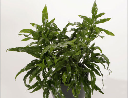 Indoor Ferns: Care and Common Types