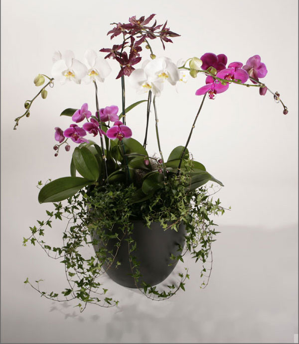 orchidaceae-2