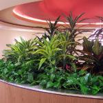 san-diego-interior-plant-9