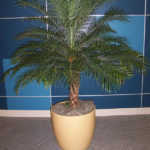 san-diego-interior-plant-2