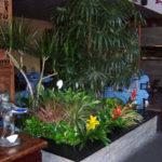 san-diego-interior-plant-4