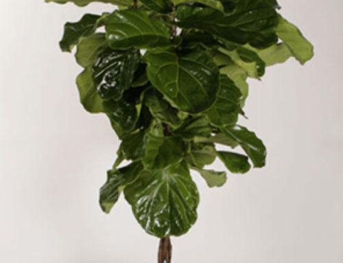 An Interior Plant Technician Explains