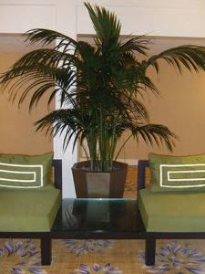 kenia-palm-install