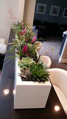 Cactaceae-family-succulent-indoor