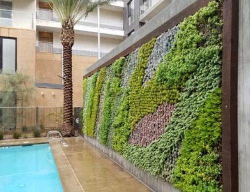 Plant Walls for Your Home and Garden