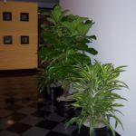 san-francisco-interior-plant-service