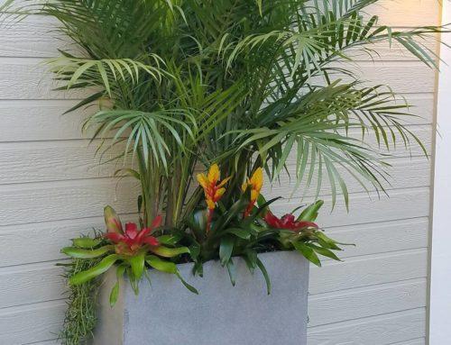 Bromeliads Blooms