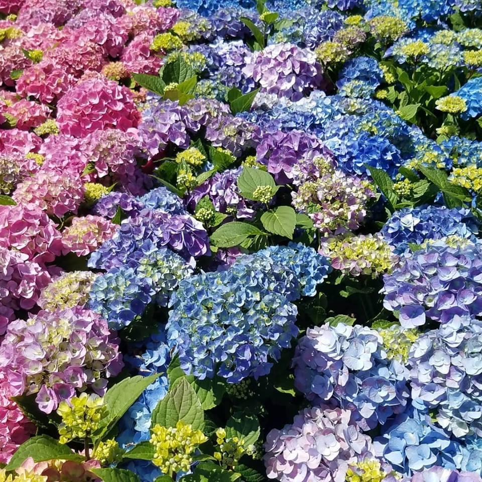 floral-design-hyrd