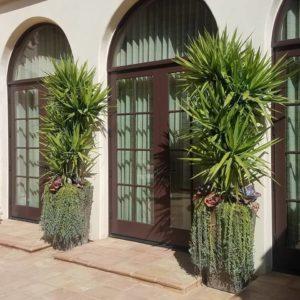 poolside-plants