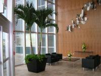 Adonidia - Lobby - Plantopia - Interior Plant Service - Louisville