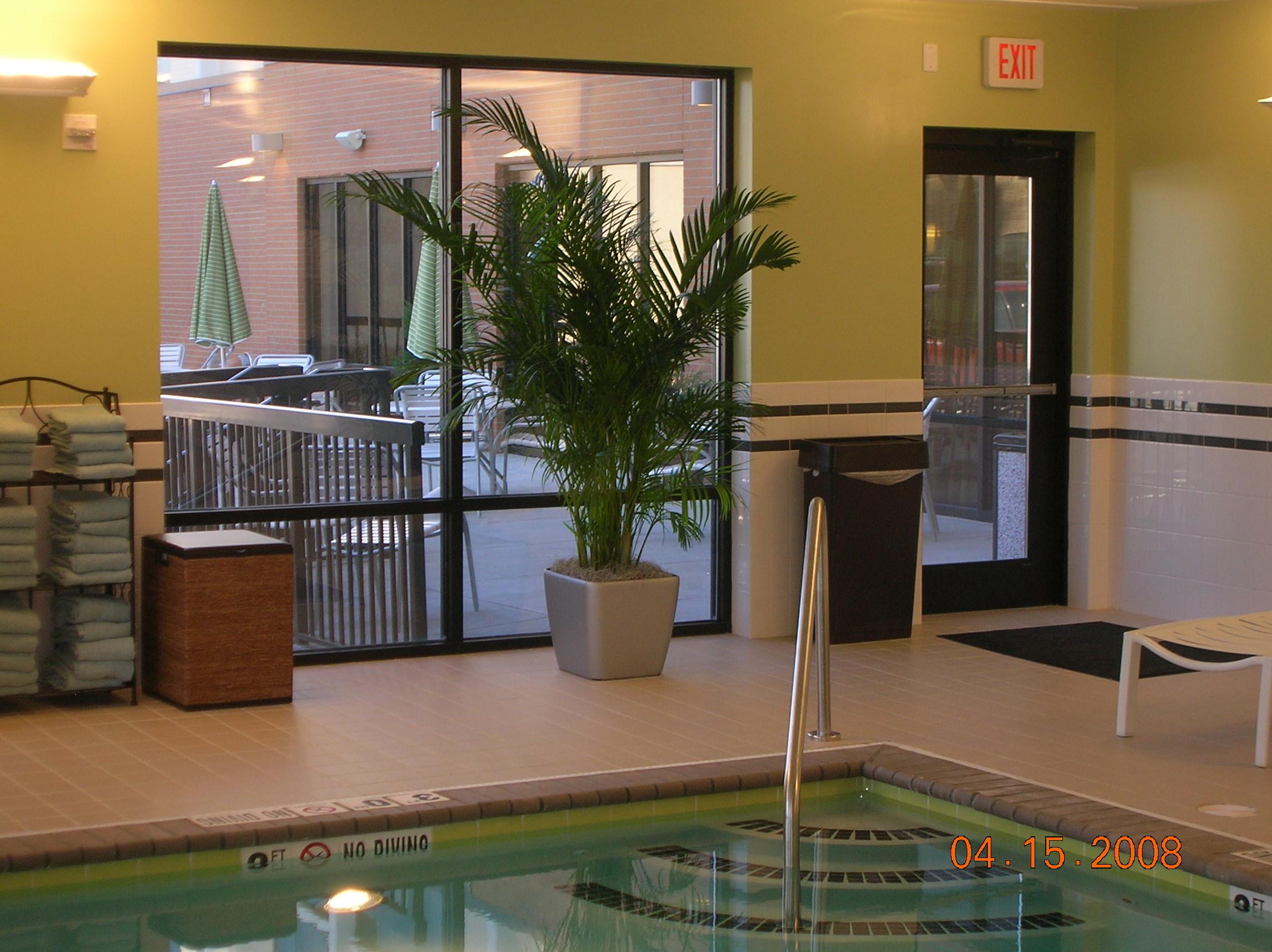 Areca Palm - Plantopia - Interior Plant Service - Louisville