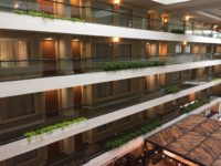 Embassy Suites - Floor Plants - Plantopia - Interior Plant Service - Louisville