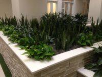 Indoor Garden - Plantopia - Interior Plant Service - Louisville