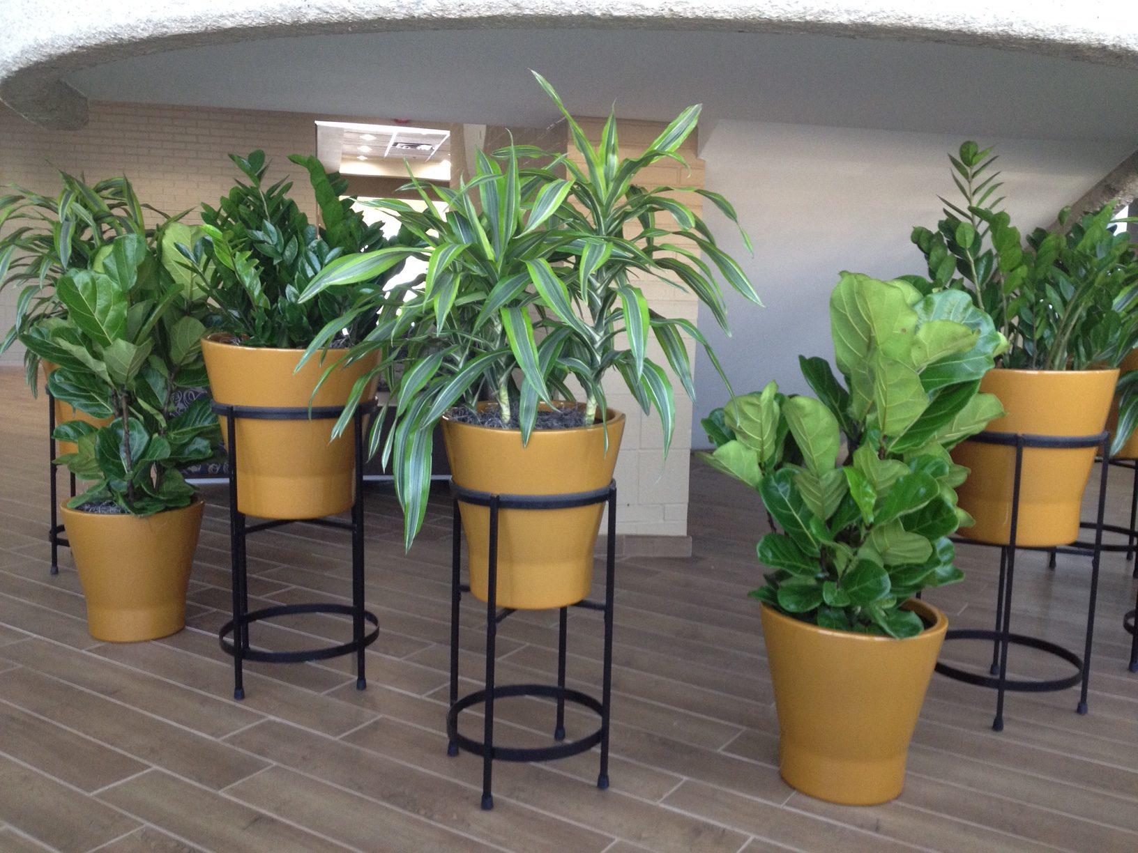 Planters Assorted Foliage - Plantopia - Interior Plant Service - Louisville