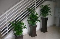 Staircase - Bamboo Palms - Plantopia - Interior Plant Service - Louisville