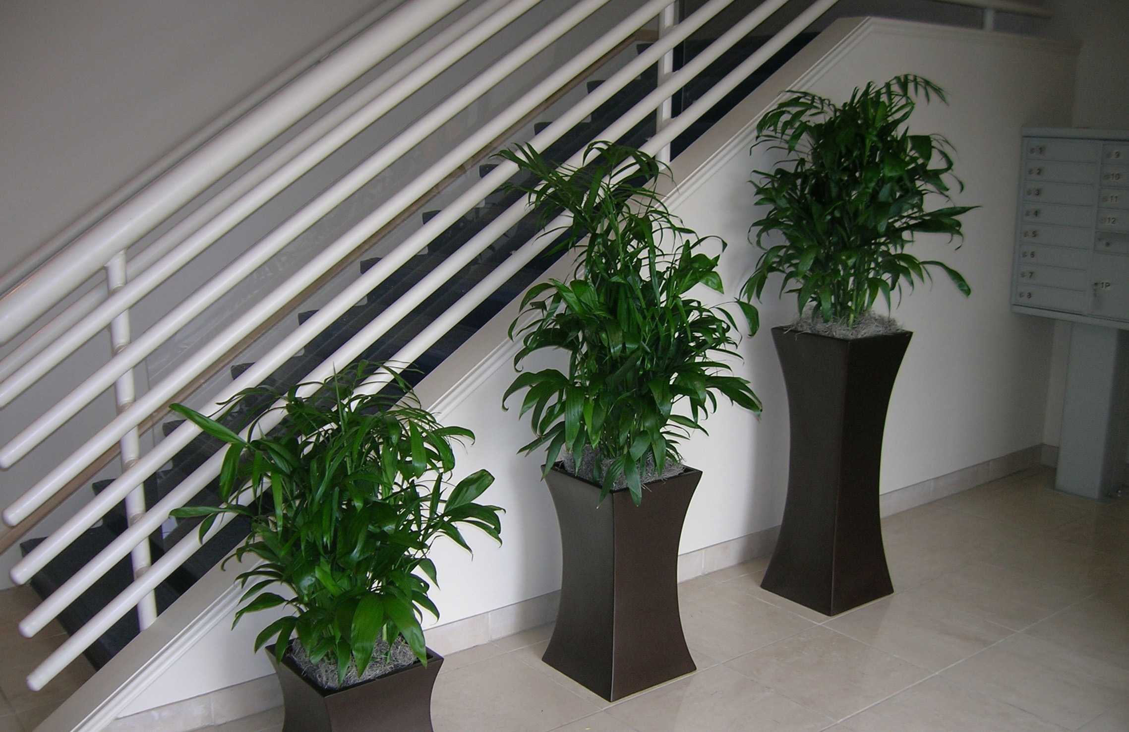 Staircase - Bamboo Palms - Plantopia - Interior Plant Service - Louisville
