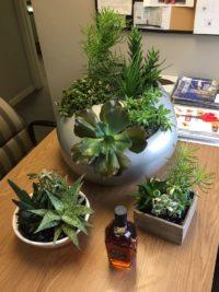 Succulents - Plantopia - Interior Plant Service - Louisville